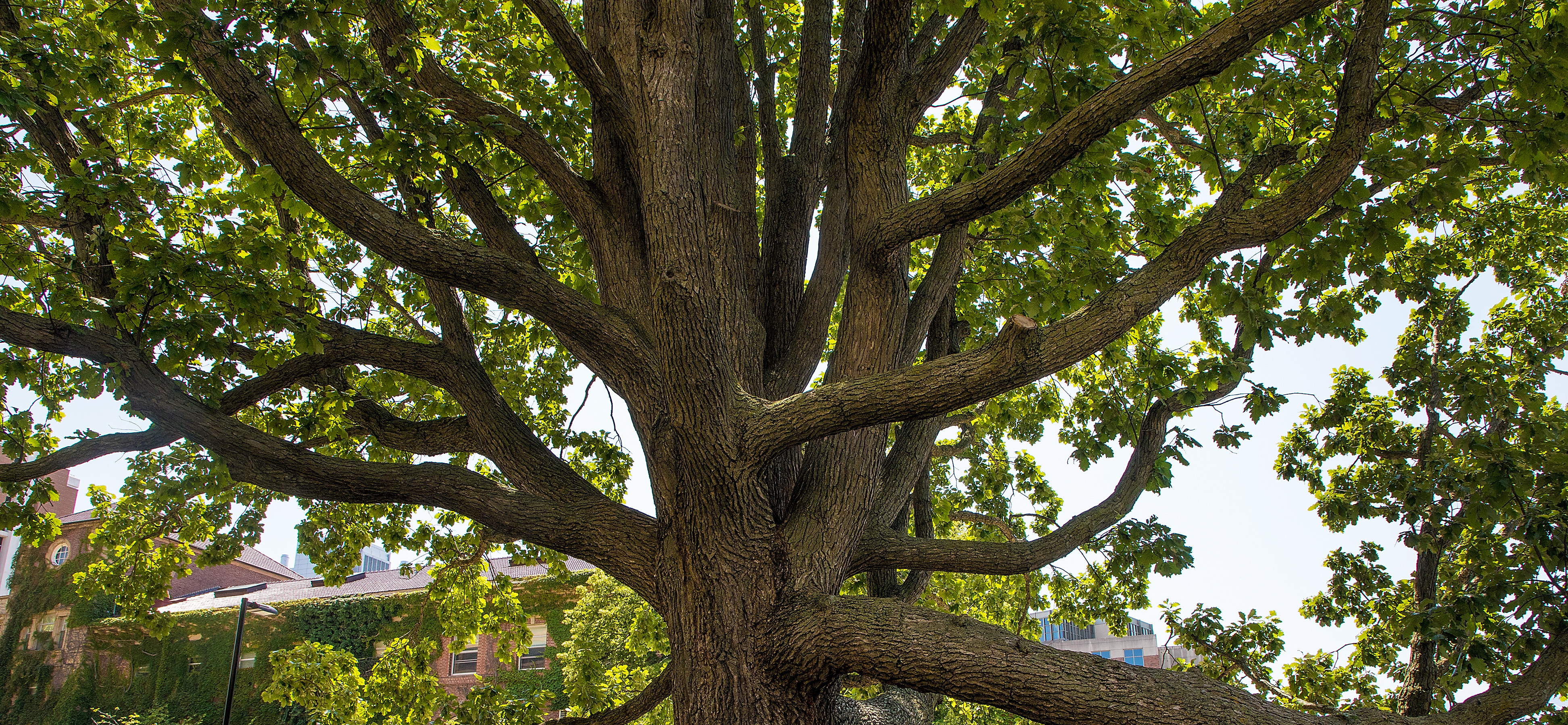 Fall Picnic - Tree